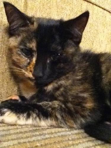 1 kitten for sale- FREE!