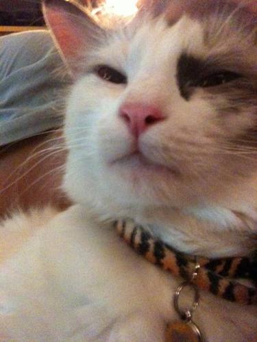 Adorable Female cat needs home ASAP