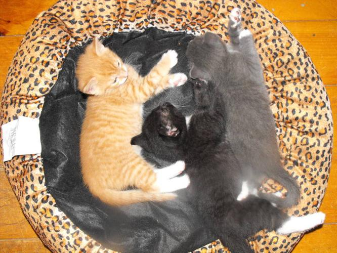Adorable kittens to give away. 8 weeks old.