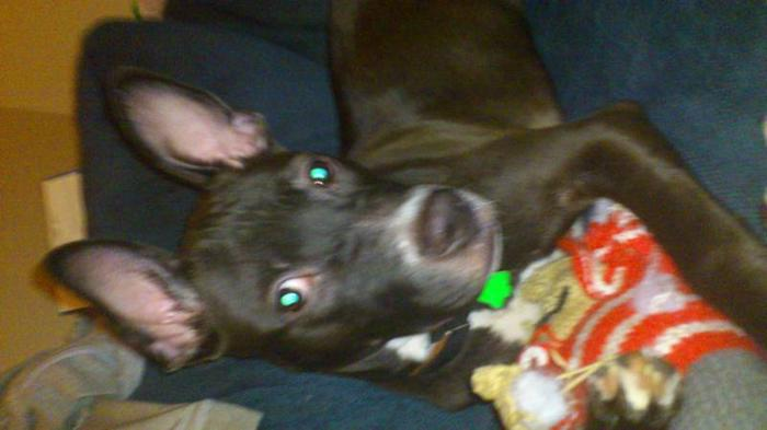 beautiful female pup great with kids