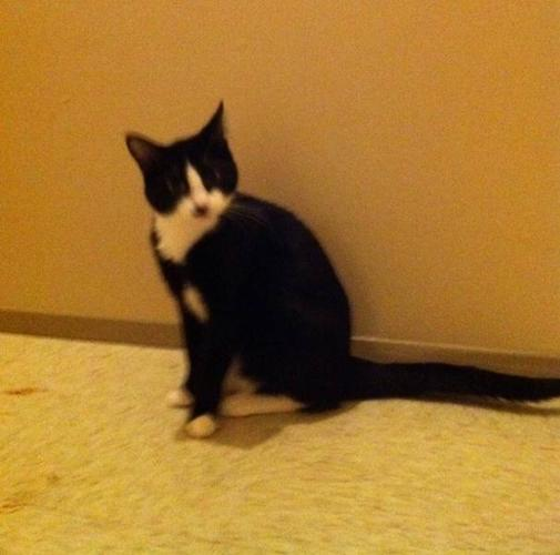 Free 1yr old cat to good home
