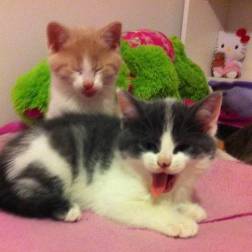 Free cute kittens