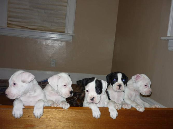 I only have one puppie left to sell from 8