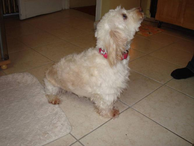 loving 3-year-old female terrier mix: does well in any home