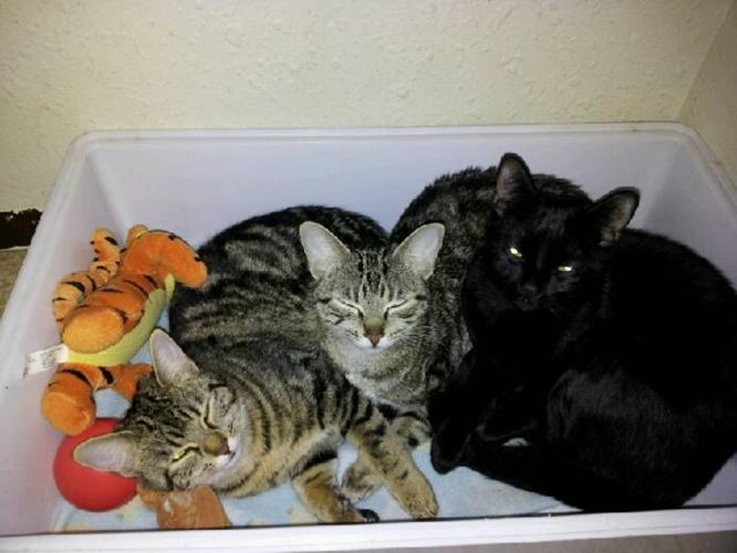 RESCUED CATS NEED HOME
