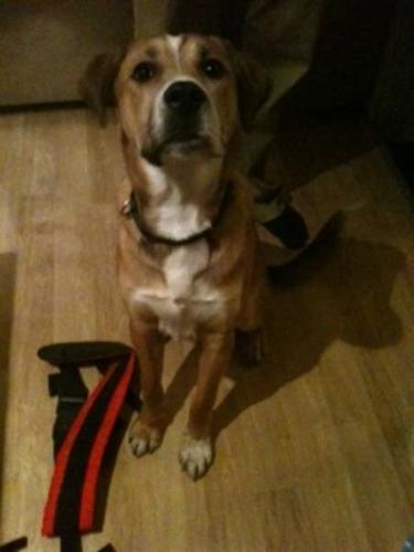 Rescued dog: Mojo