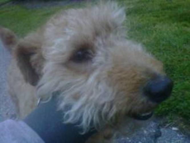 Smallish med size dog needs new home (Durham)