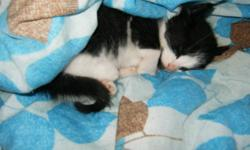 adoption Fee:$40 (helps cover the coast of the formula and other things that the kittens have needed) hi I received a litter of 3 kittens about a 4 weeks  ago now and they are about 7-8 weeks now... They are ready for their new homes today... they are