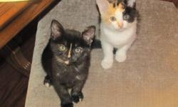 Have 2 sister cats that need a good loving home. Take one or two. One is black and one is tabby. Born in August not sure of exact date, have no shots. Both are very affectionate and look for petting. Both are litter trained. Pictures were taken about a