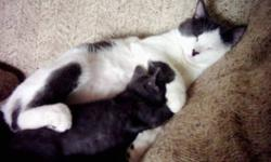 I have 2 adult cats to give away.  They have been with our family since they were kittens and now because of an unforseen move we now have to part with them.  They are both fixed and do not spray.  Well mannered, love people and kids, would be a great