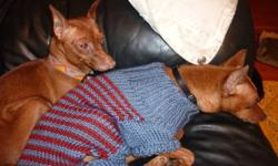 Robin and Lacey, purebred miniture pinchers, and former show dogs, have now retired and need a loving home to live in. They are 6 and 5 years old, respectively. These are very adorable, loving dogs that need a home with an experience min pin owner who