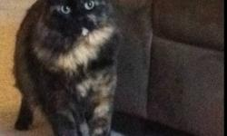 She is fixed and tattoos. Her name is Missy. Missy comes with a Free litter box & cat kennel. This ad was posted with the Kijiji Classifieds app.