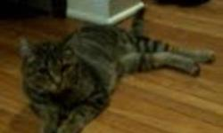 I have a 2 year old Tabby that I am giving away for $20. She is a friendly adult tabby cat. Unfortunately I cannot keep her because my place does not allow any pets. Please msg me for more information.