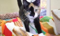 This is Bliss :) She's named due to her nature. She loves to play and cuddle. We are unsure of her age, but she's definitely still a younger kitten.   Bliss is a loving, affectionate, kind-hearted kitty just wanting true love! Visit www.petprojects.ca and