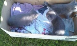 2 kittens to give away to good homes these adorable kittens are litter trained and ready for there new home please call  (403)304-0126 leave message if i cannot answer