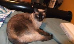 I adopted Meeka from the humane society about 4 years ago. She is a VERY loving cat and loves to be held and cuddled. Meeka has been around dogs and other cats her whole life and gets along well with both. Meeka is spayed and is a very happy and healthy