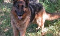 Hi. I have 6 dogs for free who I need to fing a home for as I am having my 4th child soon. Have no time. I have: Ash. - 8 year old german shepherd. very well trained and obediant has all obediance certificates to go with. great herding dog. does flyball