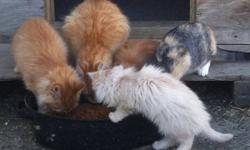 I have 6 kittens to give away.3 are 5 months and 3 are 4 months old. They have always lived outside and will be excellent farm cats.This ad was posted with the Kijiji Classifieds app.