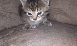 Kittens to give away to good home. There are 2 males and one female. They are litter trained already and eat hard food now.