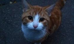 I have been feeding and taking care of this cat for the last 3 weeks. Loves affection and needs a good home ! He's about 8-9 months orange and white and dark orange swirls. If interested please contact. I will look into paying for him to get fixed and