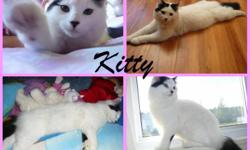 """Kitty"" *free to good home Female and about 7-8 months old Kitty litter trained and dewormed ""I WILL NOT GIVE HER TO JUST ANYBODY"" I would love for her to go with an older couple or someone without kids, because that's the reason I'm giving her away,"