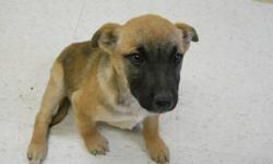 Kita and her siblings are absolutely adorable, sweet little pups! They are all spayed/neutered and vaccinated and they are each ready for a home of their very own! Consider welcoming one of these cuddly pups into your family! Adopt for only $200.00!