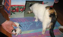 I have two healthy, adorable kitties ready for their forever homes! Both of the kittens are female and have not been spayed. They were born on Monday October 17, 2011 so they were 8 weeks yesterday. They are litter trained and eating solid food. Wish i