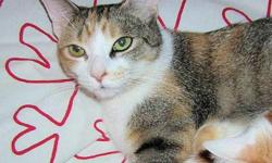 Breed: Calico   Age: Adult   Sex: F   Size: M POSTED FOR PRIVATE OWNER! PLEASE CONTACT VINY DIRECTLY AT 902 412-2851, 902 412-2851 OR rain_wendy@hotmail.com. Located in Halifax area. Dian Dian is a spayed female indoor cat who was born in 2006. She is a