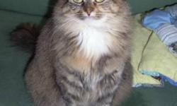 Breed: Domestic Long Hair   Age: Adult   Sex: F   Size: M Lenore has a beautiful, long tortoiseshell coat, that is incredibly soft. She is a little shy, but is gentle and loving. She would do best in a home with quiet adults who will dote on her. Lenore