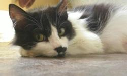 Breed: Domestic Medium Hair-black and white   Age: Adult   Sex: F   Size: S Meet Lily (2 years). Lily was found nursing 6 newborn kittens in a broken down filthy shed. It became immediately clear that Lily was homeless as she was starving, terribly thin,