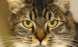 Breed: Domestic Medium Hair   Age: Adult   Sex: F   Size: M   View this pet on Petfinder.com Contact: Valley Animal Shelter   Wolfville, NS