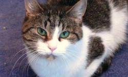 """Breed: Domestic Short Hair   Age: Adult   Sex: F   Size: S (D.O.B. Dec 7, 2006) Misha was rescued from Animal Control where she had been abandoned and left to die by her previous family because the """"kids"""" had lost interest in her and the """"parents"""" didn't"""