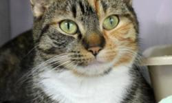 Breed: Domestic Short Hair Calico   Age: Adult   Sex: F   Size: M Meet Desiree – a lovely Calico/Tabby. Desiree was a stray found in Dartmouth with her kittens. Her three little ones have all been adopted and now it's time for Desiree to find