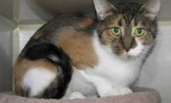 Breed: Domestic Short Hair   Age: Adult   Sex: F   Size: M   View this pet on Petfinder.com Contact: Winnipeg Pet Rescue Shelter | Winnipeg, MB