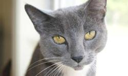 Breed: Domestic Short Hair   Age: Adult   Sex: F   Size: M Monica was brought into the Center on June 4 with her offspring Malcolm. They'd been dumped like garbage on the side of the road late at night and a kind passerby thankfully stopped and picked
