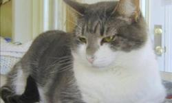 Breed: Domestic Short Hair   Age: Adult   Sex: F   Size: M Primary Color: Grey Tabby Secondary Color: White Age: 3yrs 4mths 2wks Animal has been Spayed   View this pet on Petfinder.com Contact: BC SPCA Cowichan & District Branch | Duncan, BC