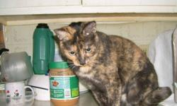 Breed: Tortoiseshell   Age: Adult   Sex: F   Size: S Margaret was brought into the vet clinic suffering from a severe upper respiratory infection. She spent a couple weeks in isolation before being brought into foster care. She is completely recovered and