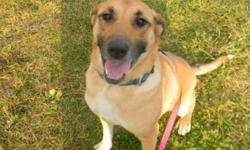 Breed: German Shepherd Dog   Age: Adult   Sex: F   Size: L Kyra is a beautiful GSD X who is good with other dogs, and just adores people. Her age is unknown, though she is not a pup and not a senior. She is already spayed so her adoption fee is set