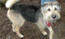 Breed: Terrier   Age: Adult   Sex: F   Size: M Kiri and Koko came to the Shelter after their dad passed away suddenly. Both girls were extremely upset and we have given them some time to adjust before putting them up for adoption. We believe that the