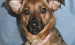 Breed: Dachshund   Age: Adult   Sex: F   Size: S Noodles was found alone on the highway several miles east of the town of Meadow Lake in early 2011. She was rescued by a passerby who brought her to the shelter for safe keeping. She's a little sweetheart