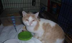 Breed: Domestic Short Hair - orange and white   Age: Adult   Sex: M   Size: L Chuck was found taped up in a box and left at the pound one morning. He was suffering from an upper respiratory infection and was obviously traumatized by his experience. He's