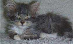 Breed: Domestic Short Hair   Age: Baby   Sex: F   Size: M Primary Color: Grey Tabby Age: 0yrs 3mths 3wks   View this pet on Petfinder.com Contact: BC SPCA (Shuswap Branch)   Salmon Arm, BC