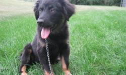 Breed: Shepherd   Age: Baby   Sex: F   Size: L Penelope was found wandering along the highway and was very sick when she was brought to us at the shelter. With alot of love, TLC, and medical attention, Penelope was able to get back to being a normal