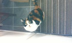 Nine year old female calico cat Halle is need of a caring and loving home as we are moving and unable to take her to our new home.  Halle is very affectionate and loves to cuddle.  She is neutered and declawed.  She loves the outdoors in the summer time,