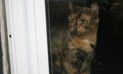 Tortoiseshell cat in need of a home. Please take in this beautiful cat. Not fixed abandonded by owner. call 473-9594
