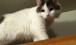 I am looking for new home for my 2 year old female cat, she is spayed.. Her name is Molly.. I am sad to see her go , but my son is allergic .. Email for more info This ad was posted with the Kijiji Classifieds app.