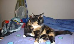 Dixie was left in our care suddenly when her owner moved out west with just three days? notice. A quiet and tremendously affectionate cat, we know she?s about three years old and has spent her entire lifetime indoors. She was used to the company of other