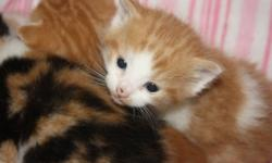 I have 4 beautiful kittens to give away.They were born on Sept.13/11 i have 2 boys and 2 girls!!!!They will be flea free and first deworming treatment!!They are 5 weeks old and eating soft and hard food mix and litter trained!!