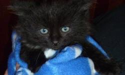 We are adorable , loving little kittens looking for a new loving home .......We are very cuddly , ( love to cuddle  up on your lap), We are litter trained and cant wait to meet you !!!!!  E-mail if interested please:)