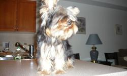 cute,smart,playful,tiny 7 months old male and female yorkies...all shots up to date,kennel and paper trained. they both are very beautiful ,affection and healthy..... moving must find good home for them $ 700 each firm. 604-217-8973